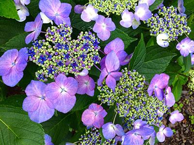 永昌寺の花々